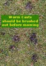 Brush out worm casts before lawn mowing.