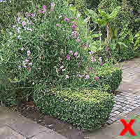Formal pruned box & stragerly informal pea.