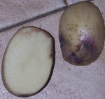 Rotting Potato Tuber