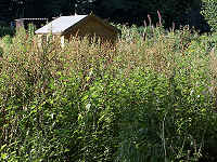Weed control in allotments & community gardens