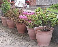 Clay coloured pots match brick work