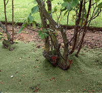 Lawn Mulch For Roses