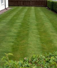 Lawn Striped