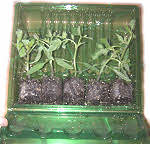 Mail Order Plant Pack.