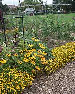 Organic Garden Flower Border