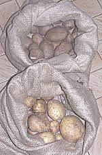 potato storage sacks