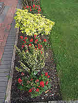Specimen planting along lawn border