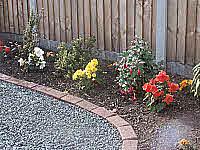 Specimen plant garden