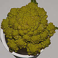 -Romanesco- Ornate Cauliflower