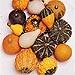Suttons Ornamental Gourd Seeds