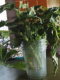 Clean Jar Clean Water Reduces Disease