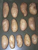 Clean & Sorted Potato 'Juliet'