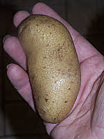 Potato Tuber - 'Juliet'